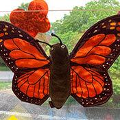 Klassentier Schmetterling Benni